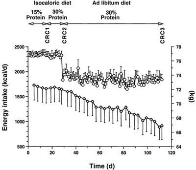Quantas calorias para perder no dia para perder o peso
