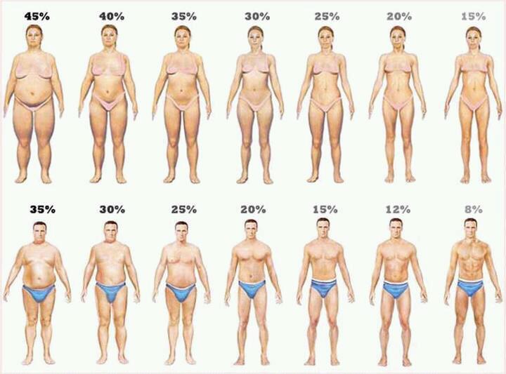 vários+percentuais+de+gordura
