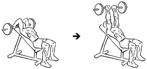 extensões-de-tríceps-com-barra
