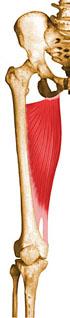 12iboaforma